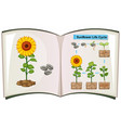 Book showing diagram of sunflower life cycle vector image