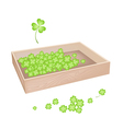 A Lot of Shamrock in Wooden Box vector image vector image