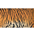 bengal tiger stripe pattern vector image