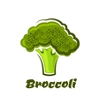 Cartoon fresh green healthy broccoli vegetable vector image