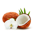 Coconut with leaves and white flower vector image vector image