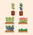 pot plants orchard garden vector image