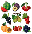 Set of isolated berries vector image
