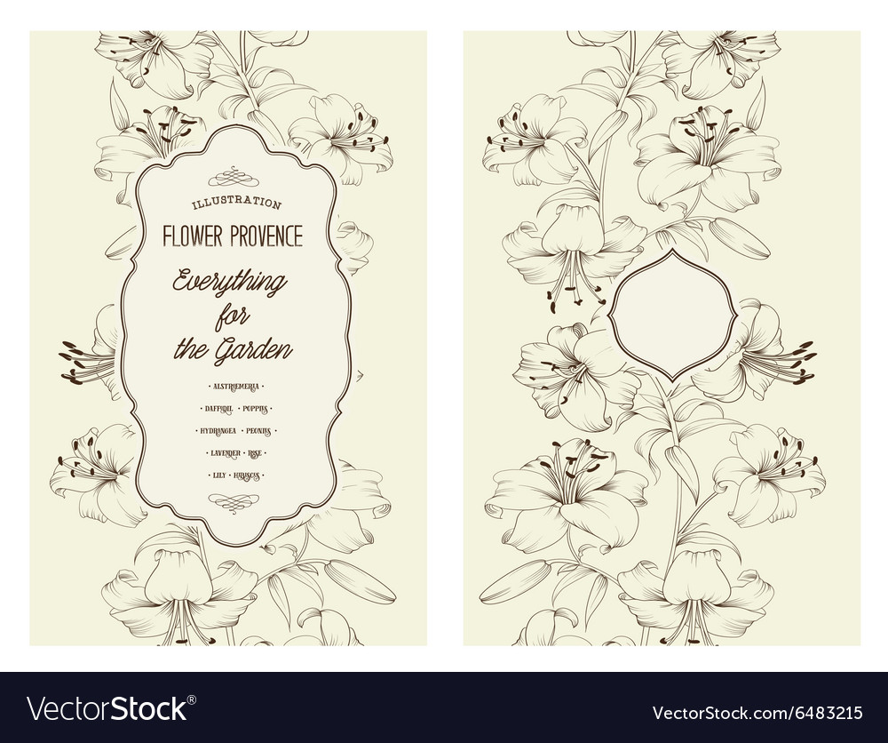 Lily spring flowers vector