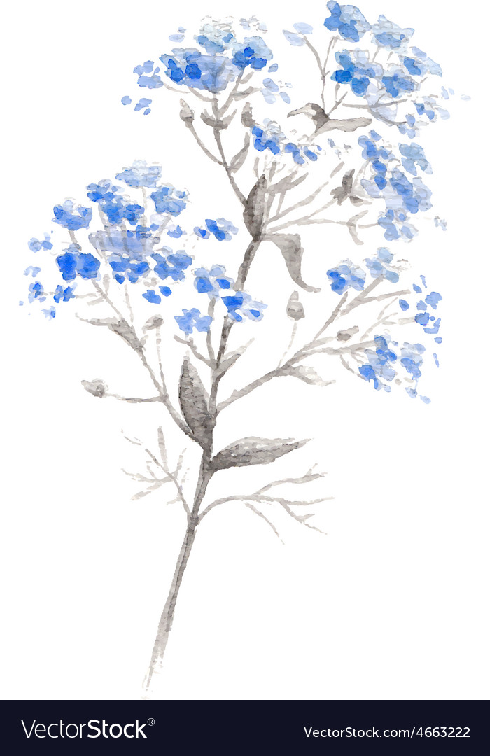 Watercolor branch of blue forgetmeflower vector