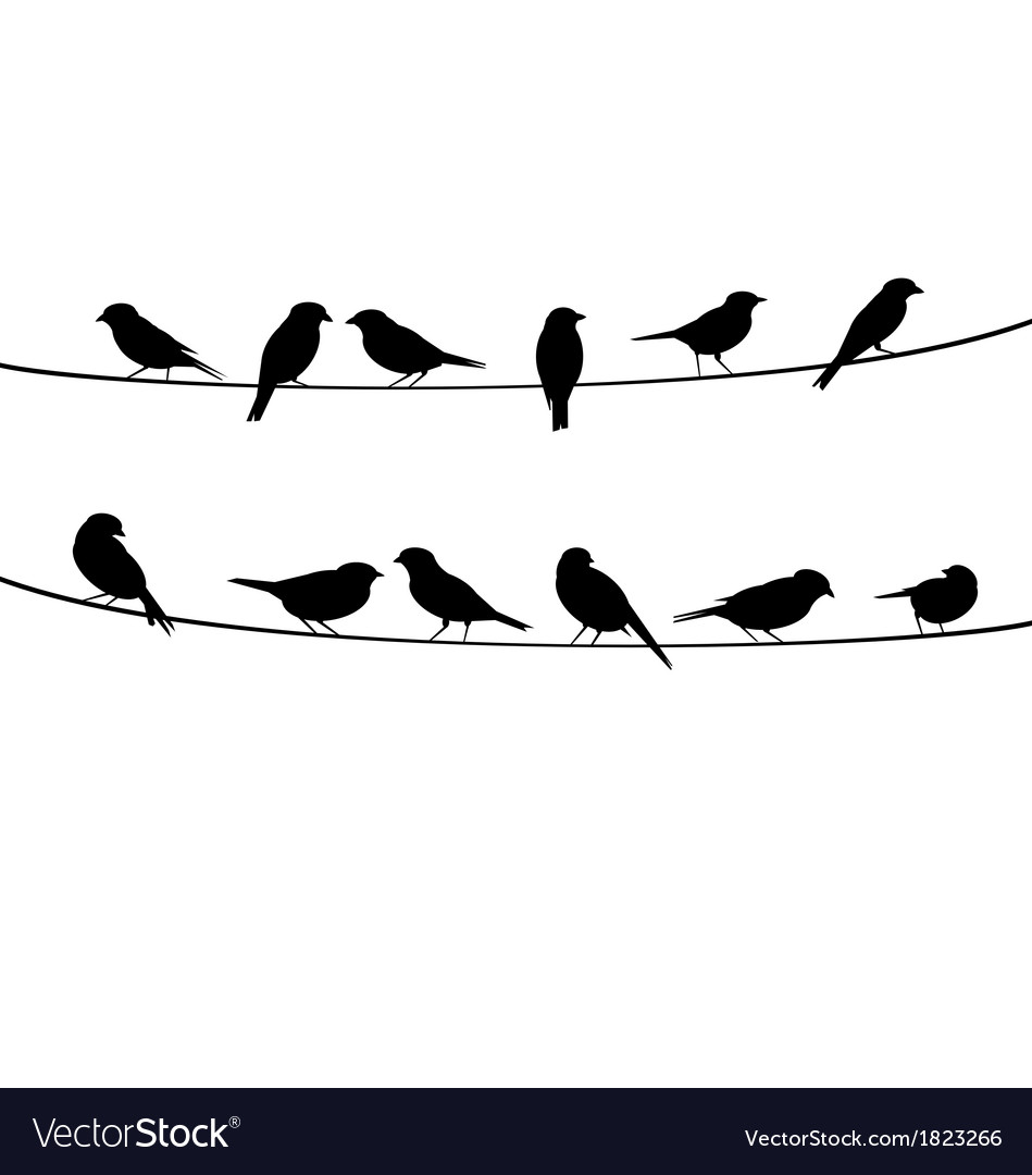 Birds on wire background vector