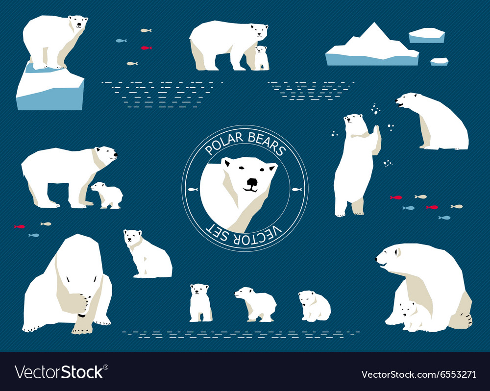 Polar bears set vector
