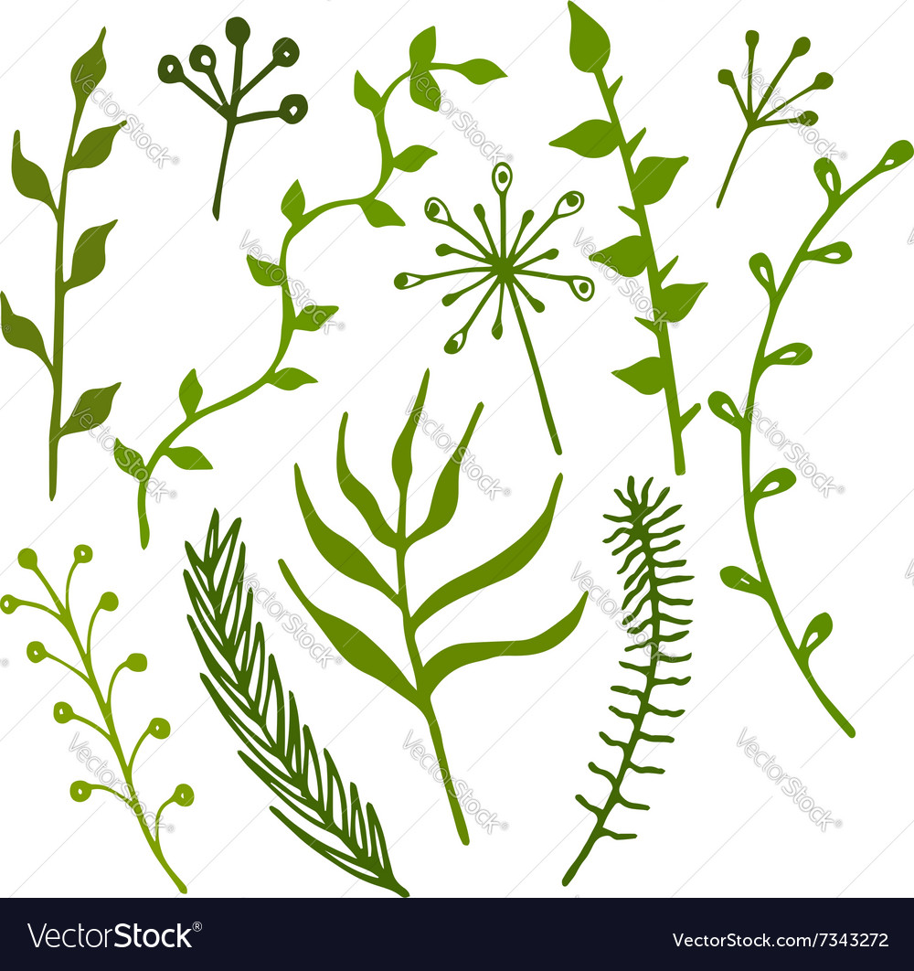 Set of handdrawn branches plants and leaves vector