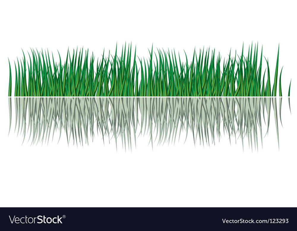 Grass in the water vector