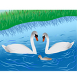 swans on lake vector image