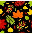autumn leaves on the black vector image