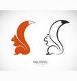 squirrel design on white background mammal vector image