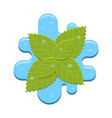 mint in water vector image
