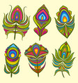 peacock bird feathers collection vector image
