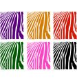 color zebra skin set vector image vector image