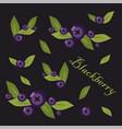 set of blueberries vector image