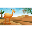 A desert with a lonely camel vector image vector image