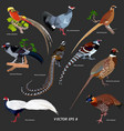 collection of different kinds of pheasants vector image