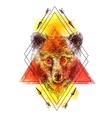 sketching of bear vector image vector image