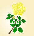 Twig yellow rose stem with leaves and bud vector image