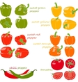 Set of vegetables with captions vector image