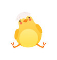 cute baby chicken sitting with shell in its head vector image