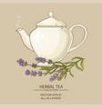 lavender tea in teapot vector image