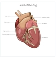 Heart of a dog vector image