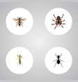realistic grasshopper tarantula wasp and other vector image