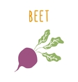 Beet root isolated on white vector image