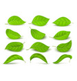 realistic green tea leaves with water drops vector image