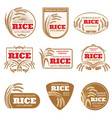 paddy rice labels organic natural product vector image