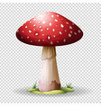 red mushroom on transparent background vector image