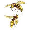 hornets vector image vector image