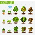 Growth stages of fruits and berries vector image