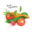 fresh vegetables vector image