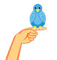 bird on the finger vector image vector image