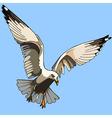 white bird seagull in flight vector image