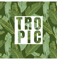 Tropical Leaves Background Exotic Graphic vector image