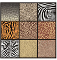 Camouflage of African animals vector image vector image