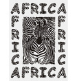 Africa background with text and texture zebras vector image