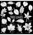 Leaves of Plants Pictogram Set vector image
