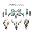 outline icon skull animals vector image