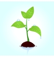 seedling vector image
