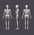 set of realistic skeletons isolated on gray vector image