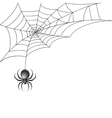 Black spider with web background vector image
