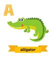 Alligator A letter Cute children animal alphabet vector image