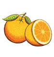 Orange fruits isolated vector image vector image