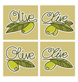 olive lettering vector image vector image