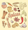 spices hand drawn doodle with chili pepper vector image